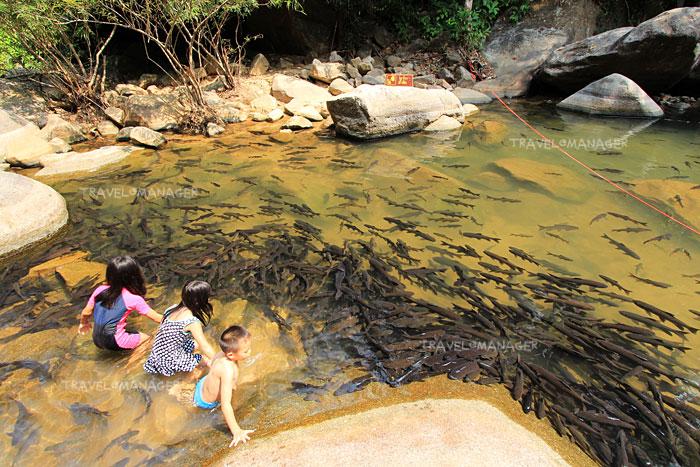 เด็กๆ ลงเล่นน้ำกับปลาพลวง