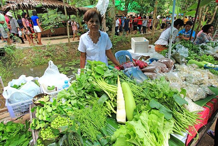 พืชผักปลอดสารเคมี เก็บสดๆจากชุมชน