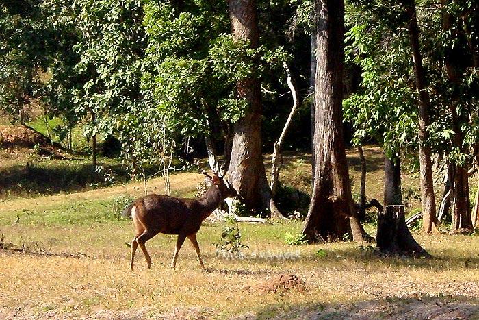 ป่าภูเขียวถิ่นที่อยู่อาศัยของสัตว์ป่าอันหลากหลาย
