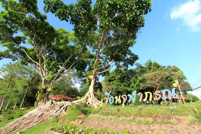 ต้นไม้คู่ รากงาม จุดถ่ายรูปยอดฮิตแห่งเขื่อนจุฬาภรณ์