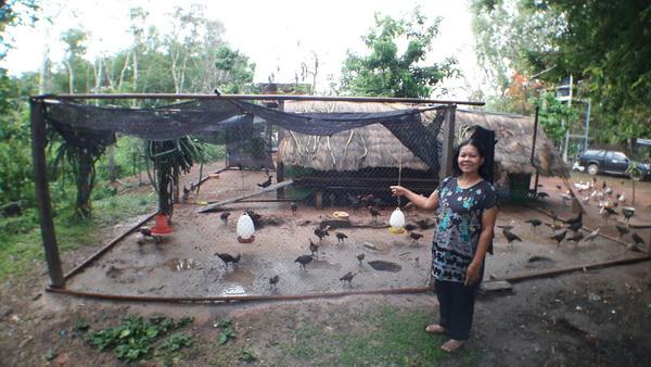 คอกไก่ชาวบ้านม่วง อ.เมืองนครพนม ที่งูหลามยักษ์เลื้อยเข้ามากินไก่ชาวบ้าน