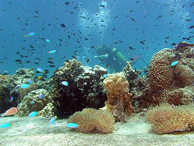 """เปิดโลกใต้ทะเล """"เกาะเต่า"""" สัมผัสความงามวิถีเกาะ"""