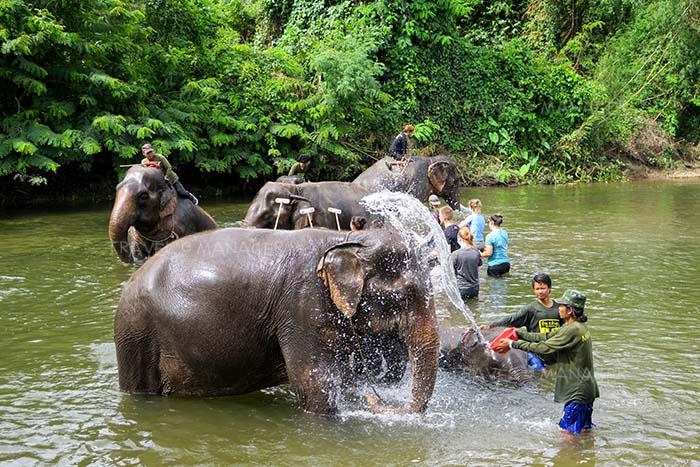 กิจกรรมอาบน้ำให้ช้าง