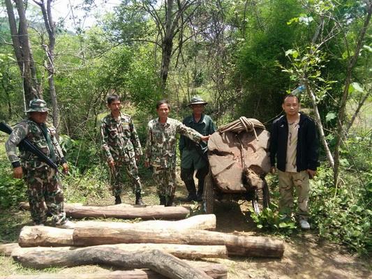 เจ้าหน้าที่ฝ่ายปกครองจ.หนองบัวลำภูและกำลังทหาร ตำรวจ ป่าไม้ ยึดไม้พะยูงจำนวนมาก ในป่าอุทยานแห่งชาติภูเก้าภูพานคำ