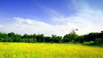 """จุฬาฯ โชว์ความสำเร็จปรับปรุงดินด้วยหญ้าแฝก """"ลดก๊าซมีเทน-เพิ่มผลผลิต"""""""