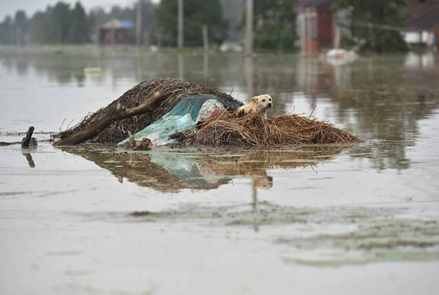 เจ้าตูบติดอยู่บนเกาะกลางถนนที่ถูกน้ำท่วมในซูเฉิง มณฑลอันฮุย เมื่อวันที่ 3 ก.ค. (ภาพ รอยเตอร์ส)