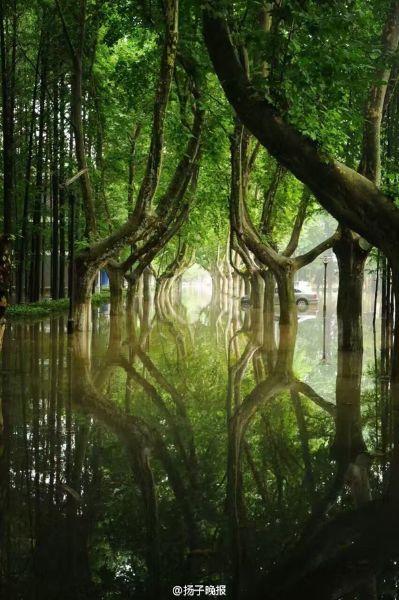 ผิวน้ำท่วมที่กว้างใหญ่ราวกับทะเล ได้สะท้อนภาพต้นไม้สูงใหญ่เขียวขจีภายในบริเวณมหาวิทยาลัย (ภาพเอเจนซี)