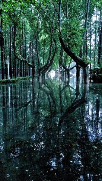 ภาพบรรยากาศมหาวิทยาลัยขณะน้ำท่วม งดงามราวกับฉากในเทพนิยาย (ภาพเอเจนซี)