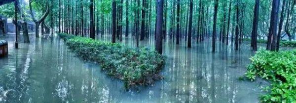 น้ำท่วมเนรมิตความสวยงามในมหาวิทยาลัย (ภาพเอเจนซี)