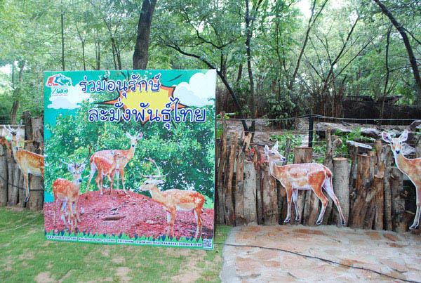 """สูญพันธุ์จากป่า! โคราชเปิดบ้านใหม่ให้ """"ละมั่งไทย"""" ชวน ปชช.ทำบุญเข้าพรรษากับสัตว์(ชมคลิป)"""