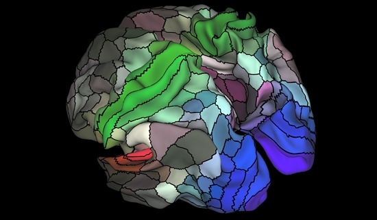 The mystery of brain