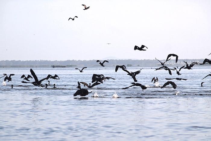 ทะเลน้อย เป็นอีกหนึ่งแหล่งชมนกน้ำที่สำคัญของเมืองไทย