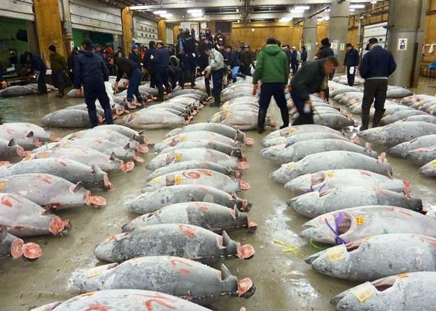 ผู้ว่าโตเกียวสั่งเปรี้ยง เลื่อนย้ายตลาดปลาสึกิจิ