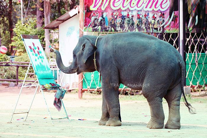 ช้างน้อยที่บ้านตากลางแสดงความสามารถด้วยการวาดภาพ