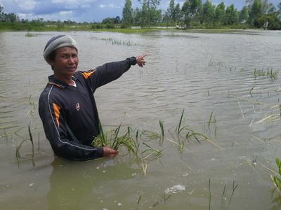 ชลประทานเตือนรับแม่น้ำมูลล้นตลิ่ง หลังไหลท่วมนาข้าวริมแม่น้ำแล้วกว่า 250 ไร่