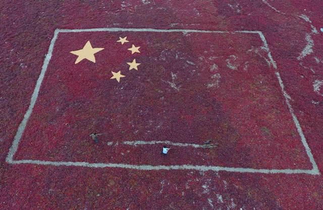 พริกถูกนำมาประดับแต่งเป็นรูปธงชาติจีนก่อนวันฉลองวันชาติจีนในอำเภอเหอโซ่ว มณฑลซินเจียง ภาพเมื่อวันที่ 29 ก.ย. 2016 (ภาพ รอยเตอร์ส)