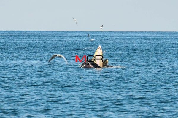 """เริ่มแล้ว """"เทศกาลชมวาฬ ทานปู ครั้งที่ 3"""" ที่หาดเจ้าสำราญ"""