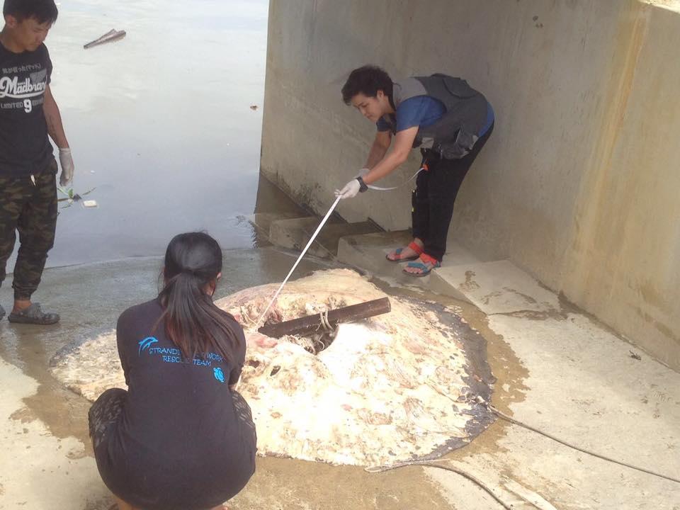 """เล็งฟ้อง """"โรงงานเอทานอลราชบุรี"""" สัปดาห์นี้ ต้นเหตุ """"สุสานปลากระเบน"""" แม่น้ำแม่กลอง"""
