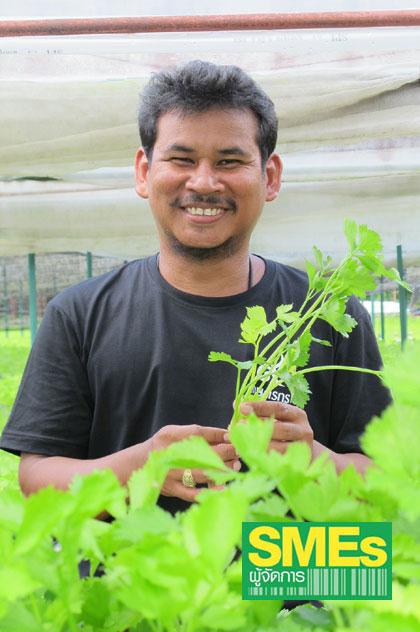 ปลูก 'ขึ้นฉ่ายไร้ดินกางมุ้ง' ขายห้าง เกษตรกรหนุ่มใต้รุ่ง สวนมรสุมยางซบ(มีคลิป)