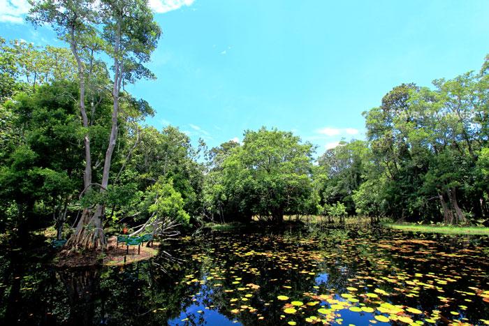 พรุโต๊ะแดง ป่าเดียว น้ำเดียว ในแดนดิน