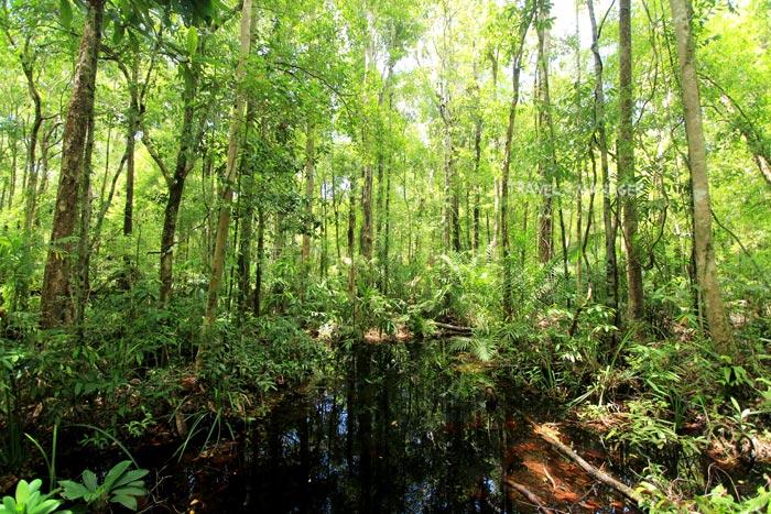 พรุโต๊ะแดง เป็นป่าพรุขนาดใหญ่ที่ยังคงความอุดมสมบูรณ์ผืนสุดท้ายของเมืองไทย