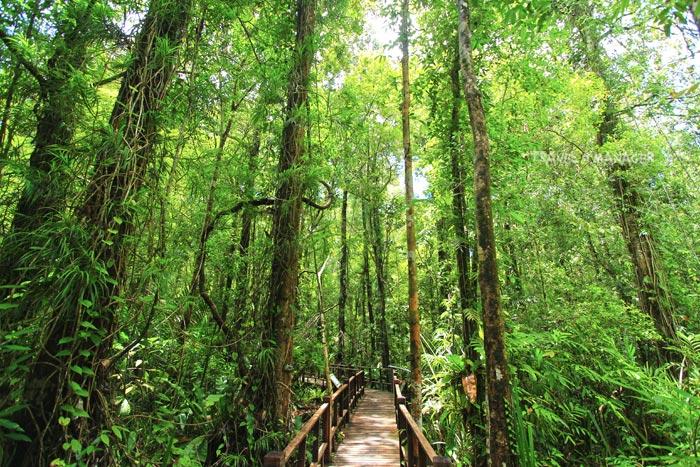 เส้นทางเดินศึกษาธรรมชาติป่าพรุโต๊ะแดง