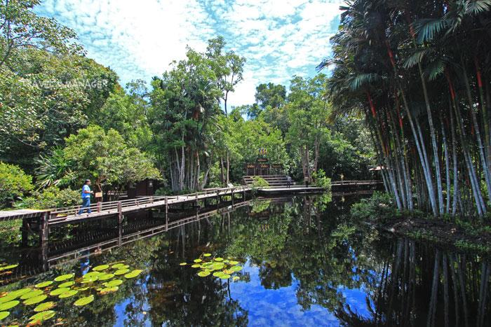 เส้นทางเดินศึกษาธรรมชาติช่วงทอดข้ามสระน้ำ