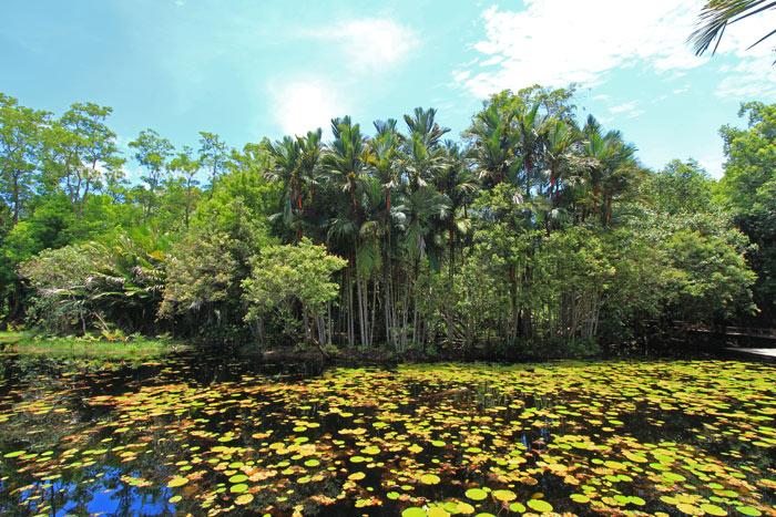 พืชพันธ์ุดินและน้ำแห่งป่าพรุโต๊ะแดง