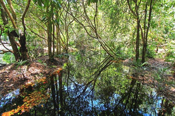 ดิน น้ำ ในป่าพรุโต๊ะแดง ที่มากด้วยพืชพันธุ์และสรรพชีวิต
