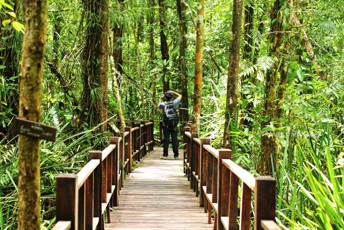 เส้นทางศึกษาธรรมชาติป่าพรุโต๊ะแดง มากไปด้วยสิ่งน่าสนใจให้เที่ยวชม