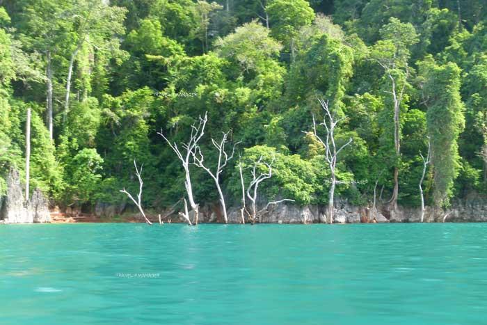 น้ำภายในอ่างเก็บน้ำเขื่อนรัชชประภา มีสีเขียวใสมรกตงดงาม