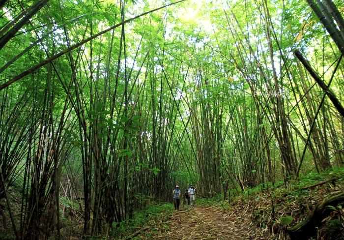เส้นทางเดินผ่านป่าไผ่ 16 ก.ม. แรก