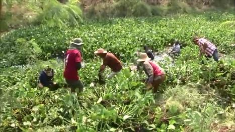 """ผงะผักตบชวามีถึง 6.2 ล้านตัน! รัฐดีเดย์ชวนกำจัดทั่วไทย 4 ธ.ค.นี้ - """"บิ๊กป้อม"""" ถกแก้รถติดรัชโยธิน"""