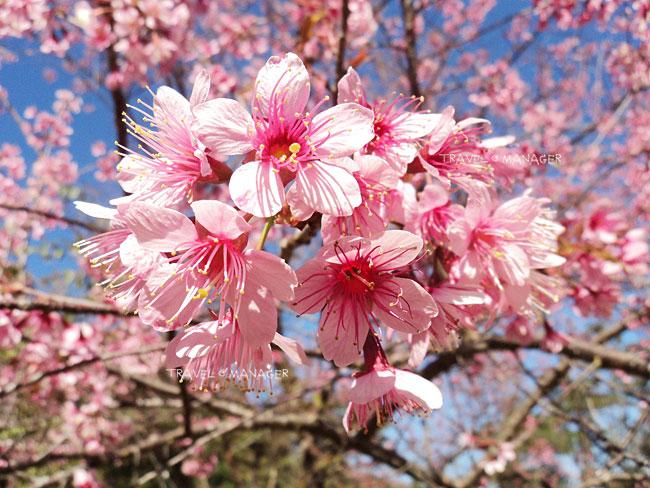 ดอกไม้สวยขนาดนี้เลยมีคนอยากเด็ดมาชื่นชมไว้คนเดียว