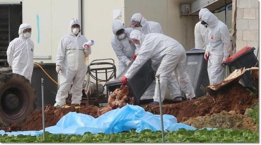 In Clip: ญี่ปุ่นสั่งฆ่าสัตว์ปีก 210,000 ตัว บนเกาะฮอกไกโด หลังหวัดนกระบาดลาม