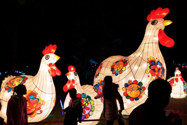 โคมไฟรูปไก่ต้อนรับปีระกา (ภาพรอยเตอร์ส)