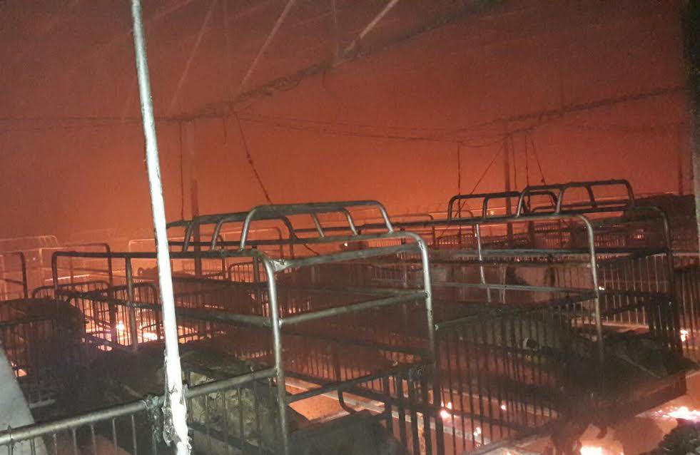 .ส.อ.สุดเศร้าไฟไหม้ฟาร์มสุกร สูญร่วม 25 ล้านบาท