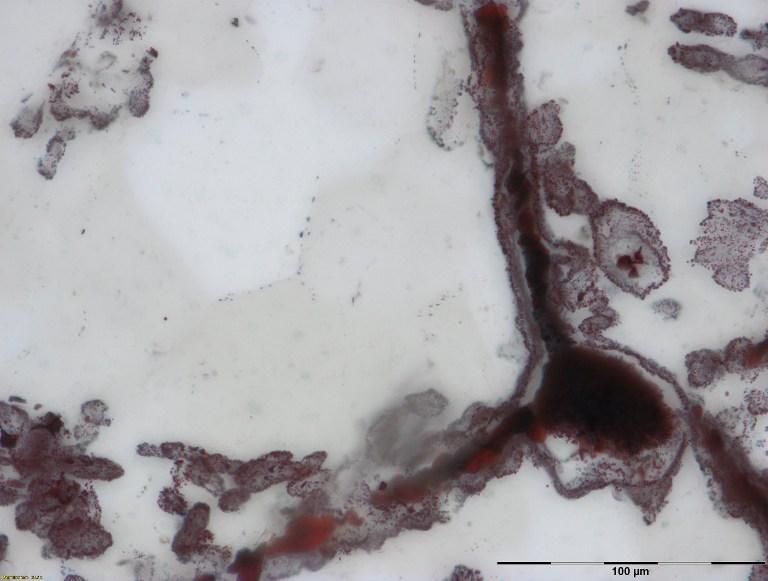 ภาพเส้นฮีมาไทต์เชื่อมกับก้อนเหล็กที่มุมขวาล่างของภาพ ซึ่งพบในหินตะกอนบริเวณปล่องน้ำร้อนก้นมหาสมุทร ซึ่งโครงสร้างที่เห็นนี้คือเซลล์ของจุลินทรีย์ ซึ่งคล้ายกับจุลินทรีย์ในปัจจุบันที่พบในบริเวณปล่องน้ำร้อนตรงก้นมหาสมุทร  (Matt Dodd / NATURE PUBLISHING GROUP / AFP)