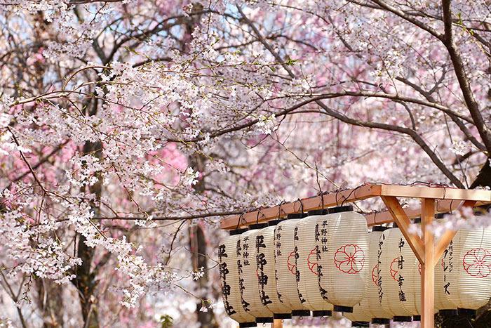 ที่พักแนะนำ ใน 5 สถานที่ชมดอกซากุระญี่ปุ่นที่คนไทยค้นหามากที่สุด