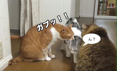 นิสัยแปลกของคนญี่ปุ่นที่คุณไม่เคยรู้