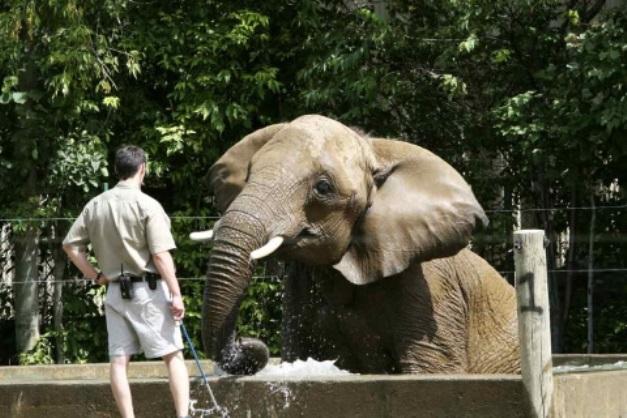 คนเลี้ยงช้างชาวไทยถูกช้างสวนสัตว์ญี่ปุ่นฟาดงวงใส่เสียชีวิตคาที่ (ชมคลิป)