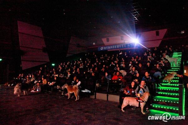 จีนเปิดตัวโรงภาพยนตร์สำหรับคนรักหมา อนุญาตให้พาคุณตูบเข้าร่วมดูหนังได้ (ชมภาพ)