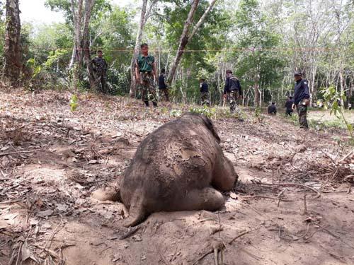 ลูกช้างป่าตายในสวนยางพาราทุ่งเบญจา พบถูกอาวุธปืนลูกซองยิง
