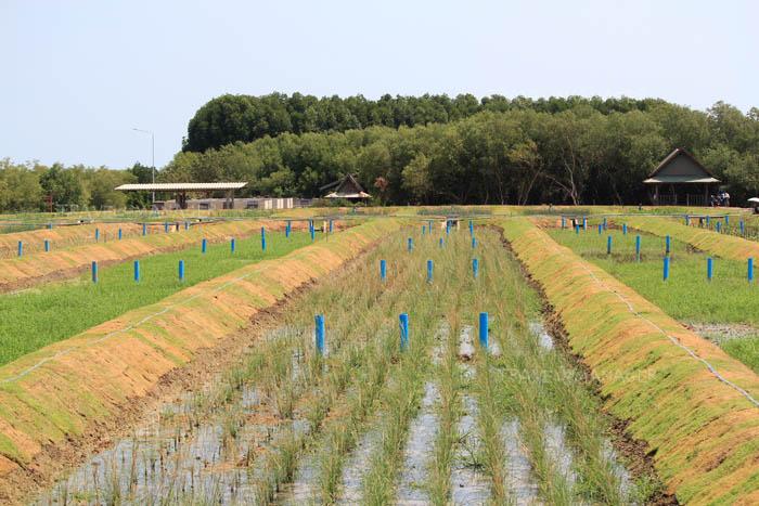 ระบบบำบัดน้ำเสียโดยพืชและหญ้ากรองน้ำเสีย