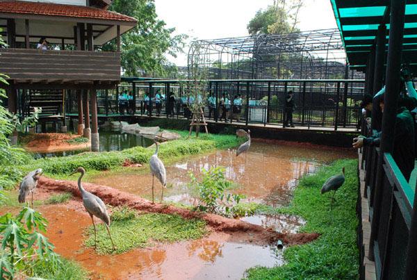 เปิดส่วนแสดงกระเรียนโลก... แหล่งเรียนรู้นกกระเรียนแห่งเดียวของไทยที่สวนสัตว์โคราช(ชมคลิป)
