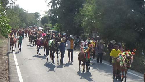 ประชาชนให้ความสนใจ ม้าเต้นตามจังหวะเพลง