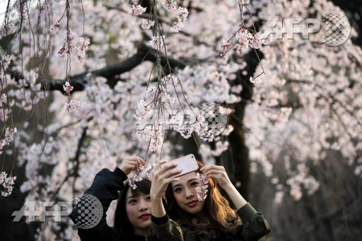 Women take selfies with cherry blossoms in a park in Tokyo on March 30, 2017. Behrouz Mehri/AFP