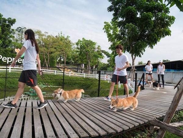 """ยกพลคนรักหมา และผองเพื่อนสี่ขา """"หมาราธอน Powered by PTT"""" ครั้งที่ 1 วิ่งสมทบทุนโครงการ 1 ล้าน 5 แสนก้าว"""