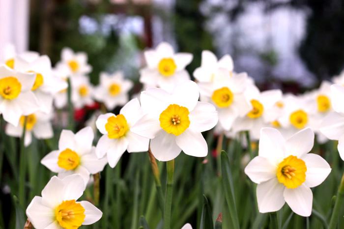 """งดงามในความเศร้า! """"เพ ลา เพลิน"""" เปิดสวน""""ดอกดารารัตน์"""" ดอกจริงของดอกไม้จันทน์ ถวายแด่ในหลวง ร.9"""