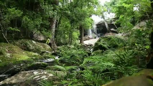 ปิดฟื้นฟูป่านาน 4 เดือน ชวนนักท่องเที่ยวปีนขึ้นภูกระดึงโค้งสุดท้าย(ชมคลิป)